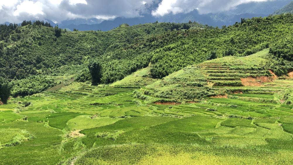 Campos de arroz desde Cat Cat